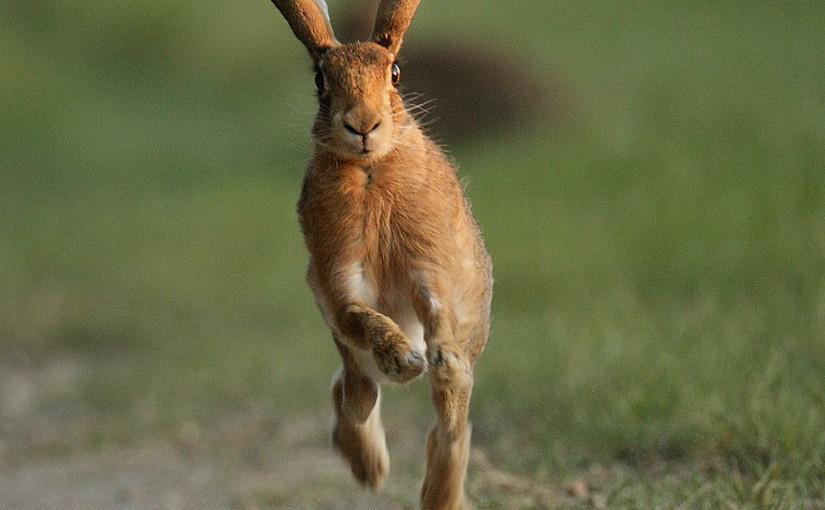 Livro: Running Lean
